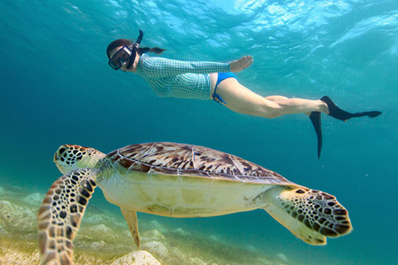 snorkeling_with_a_hawksbill_turtle_in_mexico-dd_crop